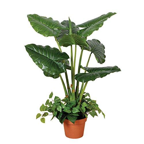Catral Allemagne Décoration, Taro plante Taro Décoration, 100 cm, VERT, 90 x 20 x 20 cm, 74010015 70e6cb