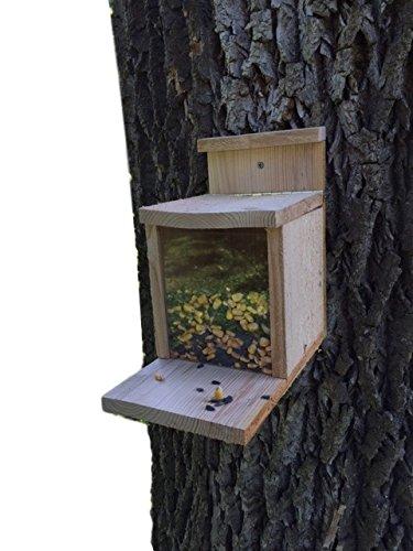 squirrel box - 7