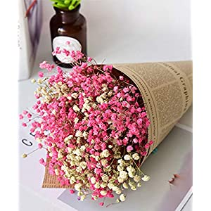 TooGet Natural Dried Flowers Gypsophila Baby's Breath Bouquet Bundles, Floral Full Stars Dry Flower Bunch Arrangements Decorate for Home Crafts, Party, Wedding, Store 94