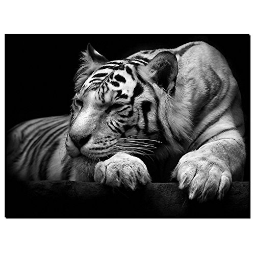 GOUPSKY New Modern Wildlife Wall Painting Animal Black and White Tiger Poster Paint on Canvas Prints Home Decorative Art Picture (24x36inchx1pcs(60x90cmx1pcs))