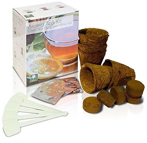 Aroma Tea Home Growing Kit - 3 Aromatic Teas to Grow Primrose