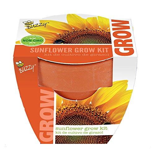 Buzzy 95519 Sunflower Mini Grow Pot