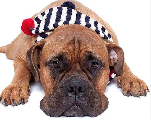 Red Navy Cream X-Small Red Navy Cream X-Small Fab Dog Striped Dog Scarf, Red Navy Cream, X-Small