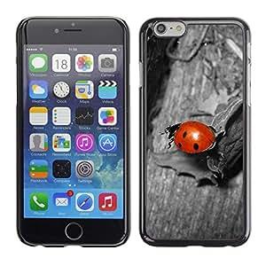 Planetar® ( Coccinelle Gris ) Apple Iphone 6 Plus 5.5 Fundas Cover Cubre Hard Case Cover