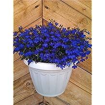 Flower Seeds Blue Garden Lobelia Missis Klibran (Lobelia erinus) Annual