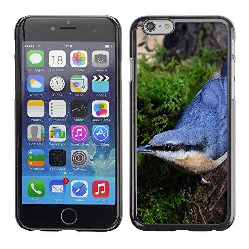 "Premio Sottile Slim Cassa Custodia Case Cover Shell // F00008240 oiseau // Apple iPhone 6 6S 6G PLUS 5.5"""