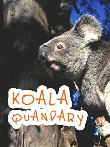 Koala Quandary
