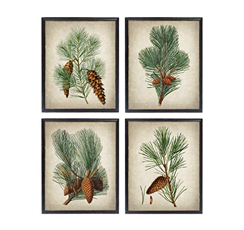 TimPrint Pine Plant Set of 4 s Vintage Illustrations Evergreen Pine Cones Botanical Plants Wall Art Prints Framed Print Wall Art