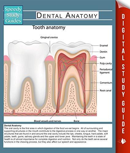 Download Dental Anatomy (Speedy Study Guides) (Human Anatomy Edition) Pdf
