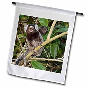 Danita Delimont - Monkeys - Brazil, Rio de Janeiro, Capuchin monkeys - SA04 KRS0017 - Keith and Rebecca Snell - 12 x 18 inch Garden Flag (fl_85729_1)