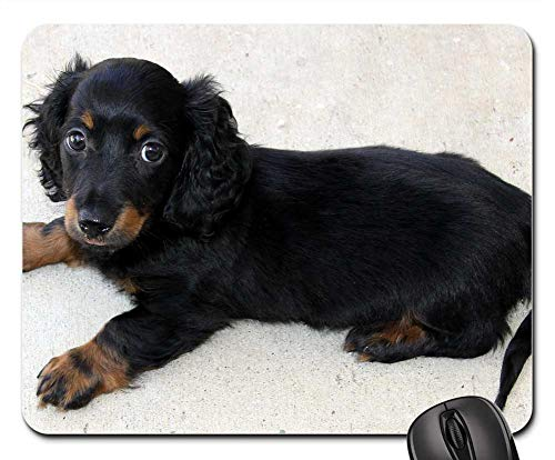 Mouse Pads - Long Hair Dachshund Puppy Mini Hound Doggy Wiener