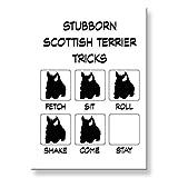 Scottish Terrier Stubborn Tricks Fridge Magnet Funny