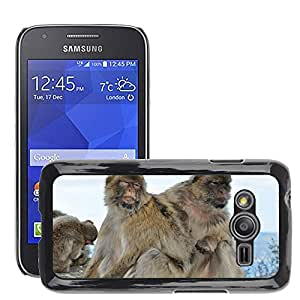 Etui Housse Coque de Protection Cover Rigide pour // M00135592 Mono Magot Animal Mamífero Naturaleza // Samsung Galaxy Ace4 / Galaxy Ace 4 LTE / SM-G313F