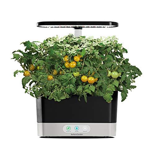 AeroGarden Golden Cherry Tomato Seed Pod Kit 810705133923