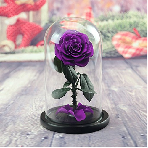 Preserved Fresh Flower, Live Forever Rose, Enchanted Rose,Natural Eternal Life Rose in Glass Dome Cover with Gift Box for Valentine's Day, Mother's Day, Anniversary, Birthday, wedding (purple) by Baobab's wish