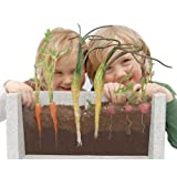 Root Vue Farm Set