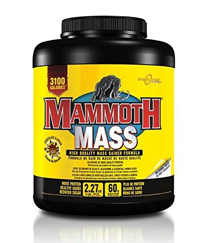 Mammoth Mass, Chocolate 5lb by Mammoth
