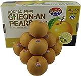 Korean Sunghwan Singo Asian Pears, Box of 10, 11 Pounds