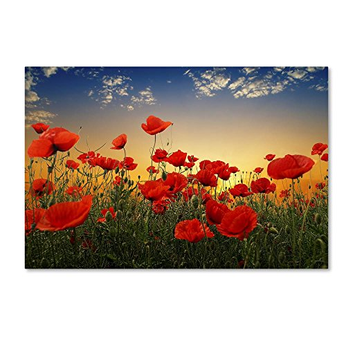 Poppies by Albena Markova, 16x24-Inch Canvas Wall Art (Poppies Landscape)