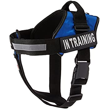 "Dogline Vest Harness for Dogs and 2 Removable in Training Patches, Large/28"" to 38"", Blue"