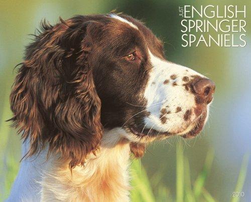 Just English Springer Spaniels 2010 Calendar