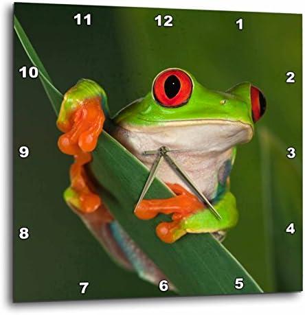 3dRose dpp_83654_2 Redeyed Tree Frog Agalychnis Callidryas NA02 AJE0384 Adam Jones Wall Clock, 13 by 13-Inch