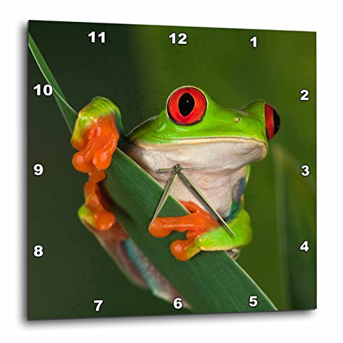 3dRose dpp_83654_1 Redeyed Tree Frog Agalychnis Callidryas NA02 AJE0384 Adam Jones Wall Clock, 10 by 10-Inch