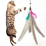 5 Pack Super Guinea Fowl Feather Refill Replacement For The Original Bird Catcher Go Cat or Da Bird! Best Interactive Cat Toy Fun Dancer Dangler Chaser Charmer Wand Fishing Pole Teaser Indoor Kittens Young Older Cats To Run Play Chase! Good Feline Exercise Training Guaranteed!, My Pet Supplies