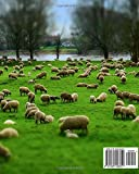 "Sheep Record Keeping Book: Farm Cattle Flock Lambing | Journal Handbook Planning Spreadsheet | Farming Essentials | Breeding, Lambing, Health & Death Tracker | 8"" x 10"" (Volume 3)"