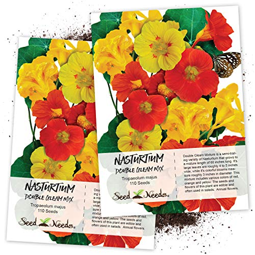 Seed Needs, Double Gleam Nasturtium (Tropaeolum majus) Twin Pack of 110 Seeds Each ()