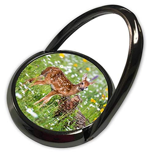 3dRose Danita Delimont - Deer - USA, Minnesota, Sandstone, Fawn Amongst The Wildflowers - Phone Ring (phr_314874_1)