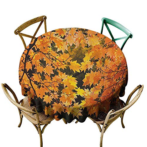 Resistant Table Cover Fall Vibrant Leaves of Autumn Maple Tree Branches with Sunbeams Seasonal Nature Orange Yellow Brown Party Decorations Table Cover Cloth 63 INCH