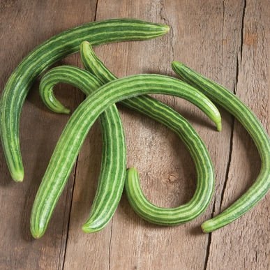 David's Garden Seeds Cucumber Asian Striped Armenian D2317 (Green) 50 Open Pollinated Seeds