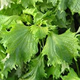 Perilla Seeds, Green (Qing Su, Ao Shiso)Fantastic flavor, mostly used for Sushi.(50 - Seeds)