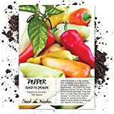 Package of 100 Seeds, Santa Fe Grande Chile Pepper (Capsicum annuum) Non-GMO Seeds by Seed Needs
