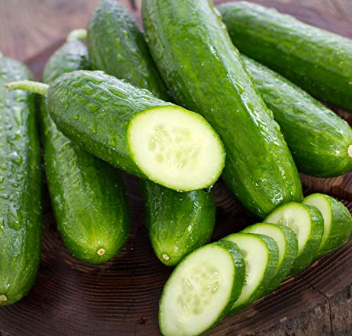 Sweet Yards Seed Co. Organic Cucumber Seeds 'Marketmore 76' - Over 35 Open Pollinated Non-GMO Seeds