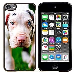 EJOOY---Cubierta de la caja de protección para la piel dura ** Apple iPod Touch 6 6th Touch6 ** --Cachorro de perro gran danés lindo