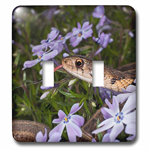 3dRose Danita Delimont - Snakes - Eastern Garter Snake in creeping phlox, Kentucky - Light Switch Covers - double toggle switch (lsp_259354_2) (Creeping Phlox)