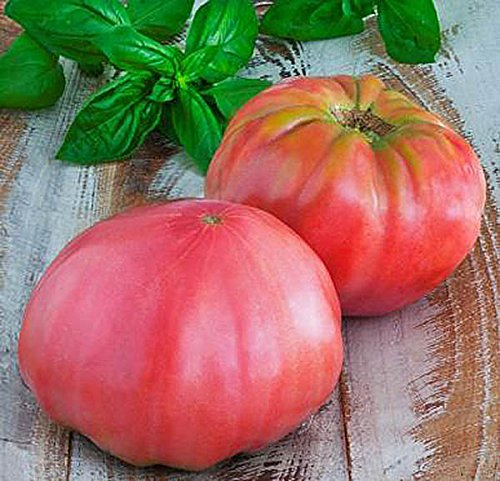 Organic Pink Brandywine Tomato Seeds - Heirloom Large Tomato - One of the Most Delicious Tomatoes for Home Growing, Non GMO - Neonicotinoid-Free. (Brandywine Tomato Pink)