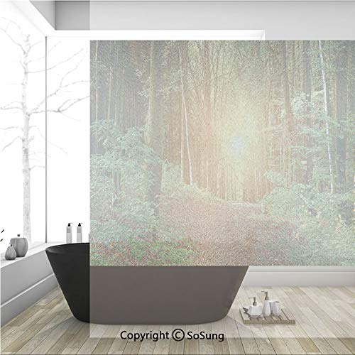 3D Decorative Privacy Window Films,Magical Light Reflection Deep in Forest Birches Nature Fall Fantasy Scene,No-Glue Self Static Cling Glass Film for Home Bedroom Bathroom Kitchen Office 36x36 Inch
