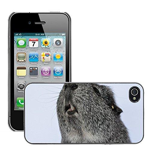 Bild Hart Handy Schwarz Schutz Case Cover Schale Etui // M00133709 Meerschweinchen Nagetier Tier Glatte // Apple iPhone 4 4S 4G