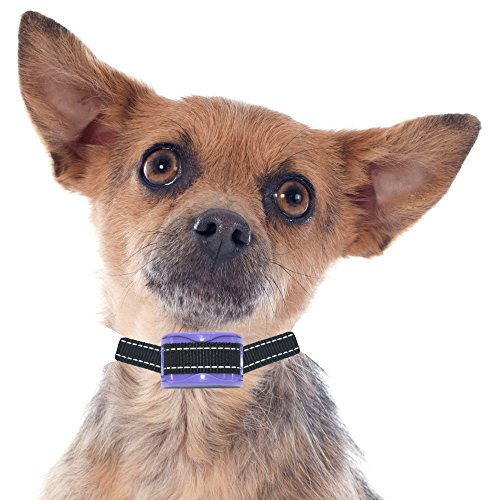 """BRAND NEW MODEL""- Our K9 ""AMETHYST""- VERY SMALL to SMALL DOGS - Light, Sound, Vibration & Sonic - Pain Free - RECHARGEABLE - Waterproof - CAN ONLY BE USED WITH OUR ""EMERALD"" TRAINING COLLAR"