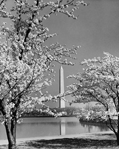 Posterazzi Reflection of an Obelisk in Water Monument Washington DC USA Poster Print (24 x - Obelisk Monument