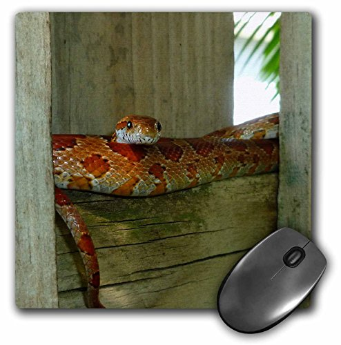 3dRose Susans Zoo Crew Animals Reptile - red rat snake in fence head up sq - MousePad (mp_156086_1) ()