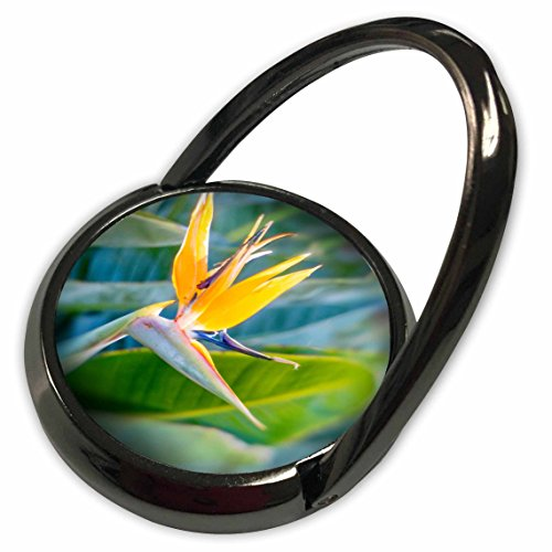 3dRose Boehm Photography Flower - Bird of Paradise Flower - Phone Ring (phr_110830_1)