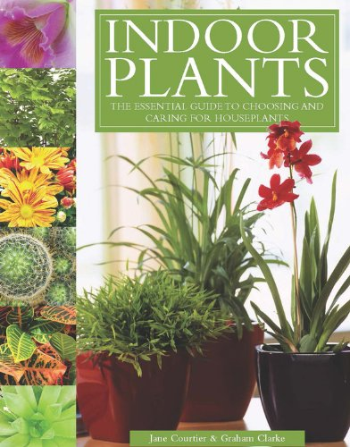 indoor-plants-the-essential-guide-to-choosing-and-caring-for-houseplants