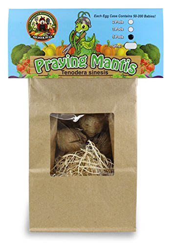 5 Praying Mantis Egg Cases With Hatching Habitat (5 XL Pods in Habitat Bag) ()