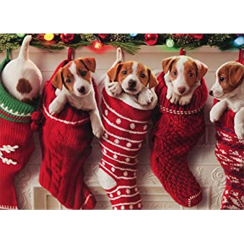puppies hanging in christmas stocking box of 10 avanti funny dog christmas cards