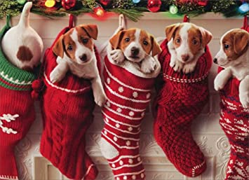 Merry Christmas Puppies.Puppies Hanging In Christmas Stocking Box Of 10 Avanti Funny Dog Christmas Cards