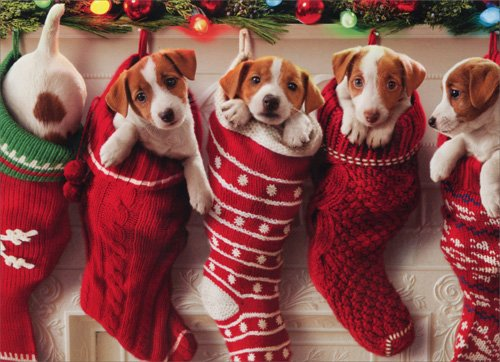 Puppies Hanging In Christmas Stocking - Box of 10 Avanti Funny Dog Christmas Cards